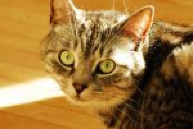 truro nova scotia cat sitter