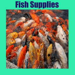 Fish Supplies