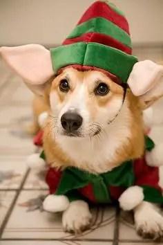 Christmas Animals (1)