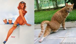 Cats that look like pinups (3)