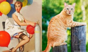 Cats that look like pinups (4)