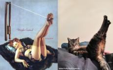 Cats that look like pinups (5)