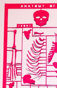 Anatomy pink - detail2