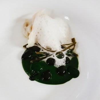 Razza, bietola, ortensia, alga