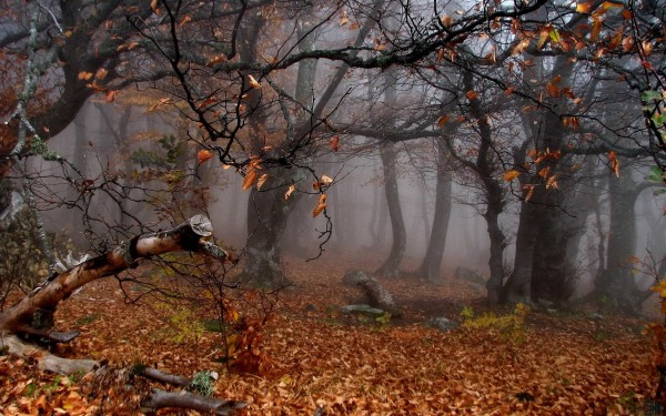 late-fall-early-winter