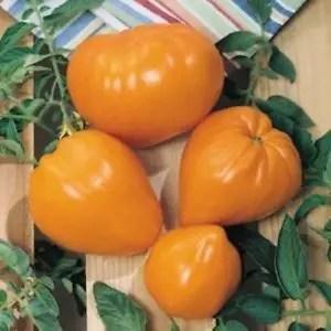 german Orange Strawberry