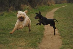 Dog Walking in Ditton, Aylesford and Larkfield