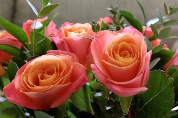 Debenhams Flowers for Mother's Day