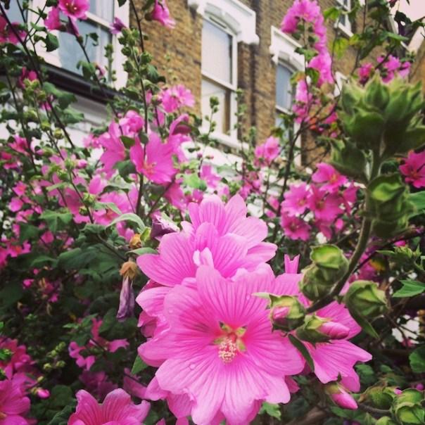 Flowers in Finsbury Park