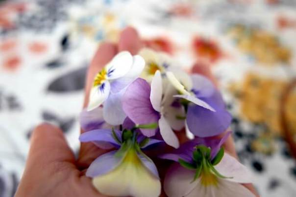 A handful of violas..