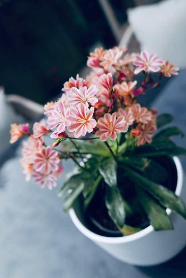 Poppy-Loves-Homebase-AFTER-12