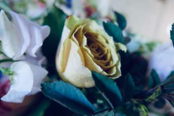 Real-Flowers-Chelsea-7