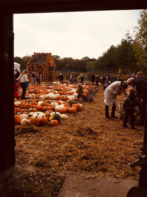Pumpkin-Picking-Near-London