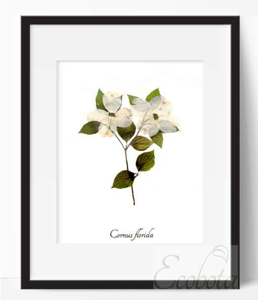 dogwood-botanical-print-pressed-flower-art-print