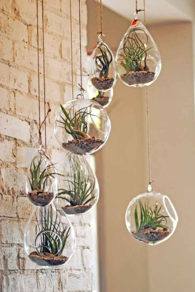 hanging planters air plants display