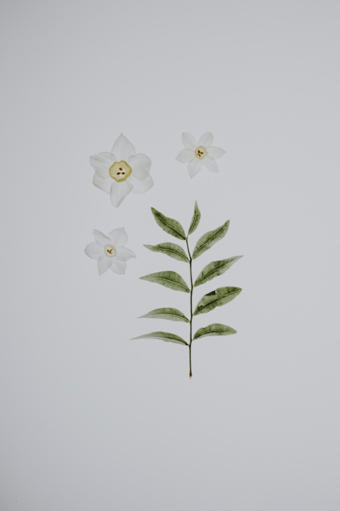 botanical print daffodil free printable art pop shop america