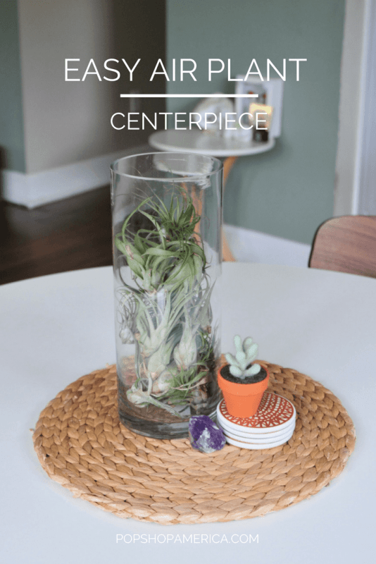 easy air plant centerpiece diy pin