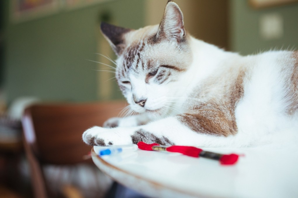 handsome the cat helping make an embroidered sweater