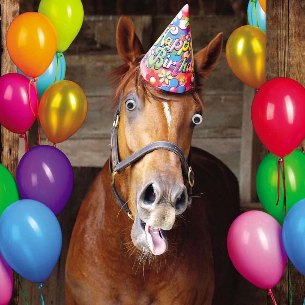 Pferde Geburtstagsgrusse L Geburtstagsgrusse 2020 05 06
