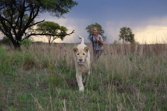 Mia and the White Lion