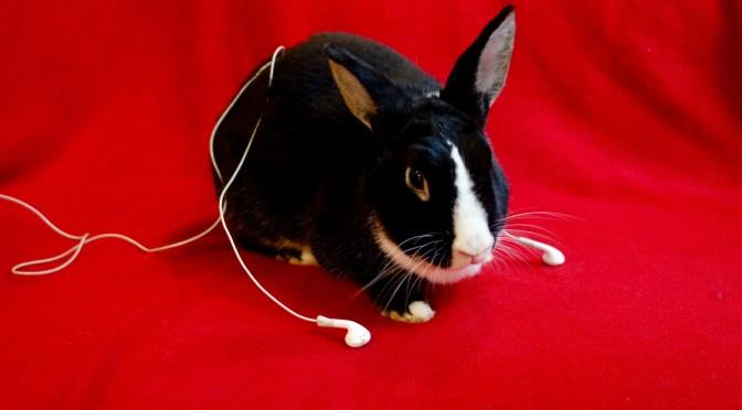 PTJ 148 News: Ear Buds