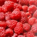 Is Raspberry Ketone Safe?