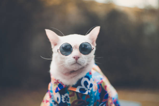 Hipster Cat wearing sunglasses