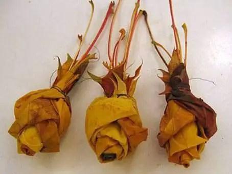 Rosas-con-hojas-secas