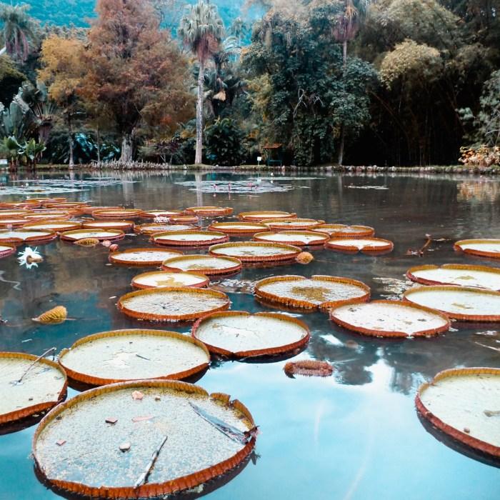 Jardín Botánico de Río de Janeiro.