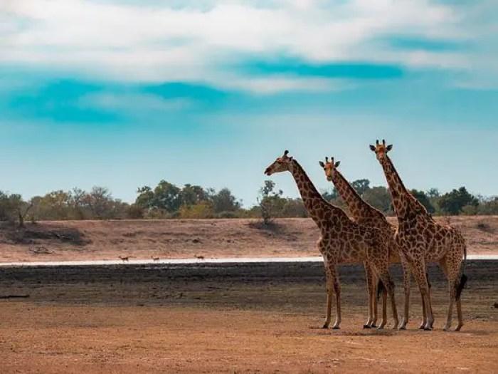 Sudáfrica, uno de los países que me muero por visitar.