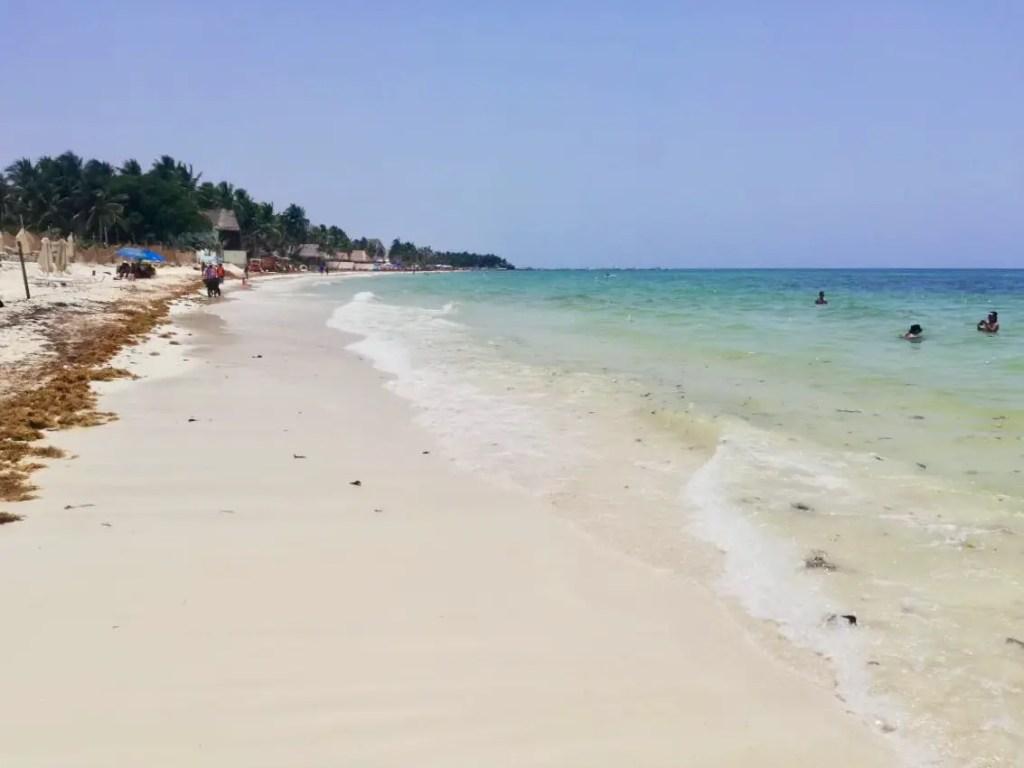 Playa mamitas con sargazo.