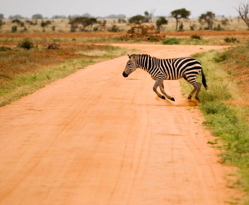 parc national de Tsavo