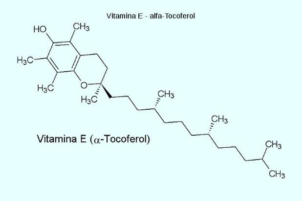 Abacates tem alta concentração de vitamina E, uma vitamina essencial para a vida humana que ajuda a prevenir muitas doenças.