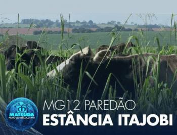 MG12 Paredão
