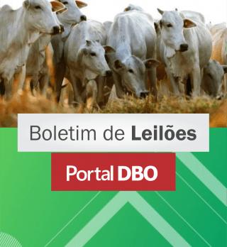 leiloes-portal-dbo