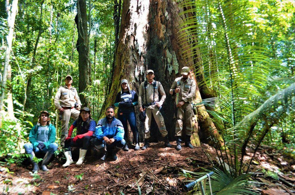 arvore1 A árvore mais alta da Amazónia tem 88 metros de altura e está a salvo dos incêndios