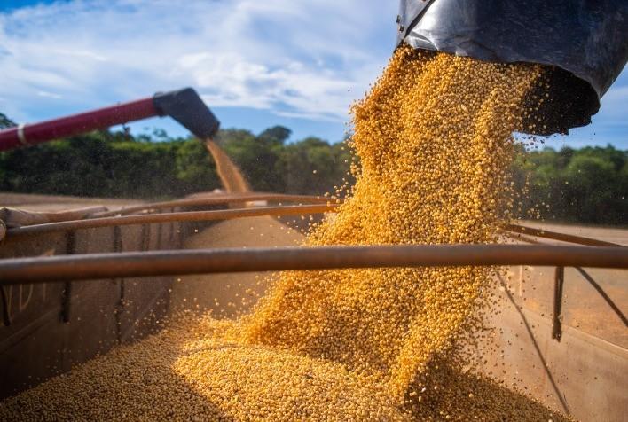 Atraso na colheita prejudica mercado de soja em fevereiro