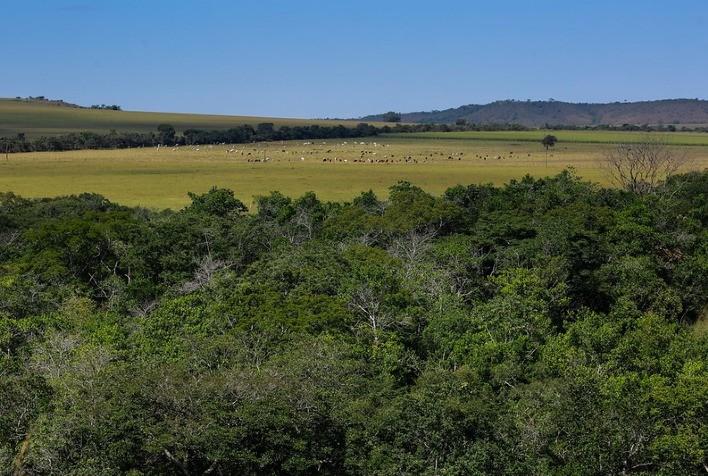 Brasil caminha na direção certa para se tornar uma potência agroambiental