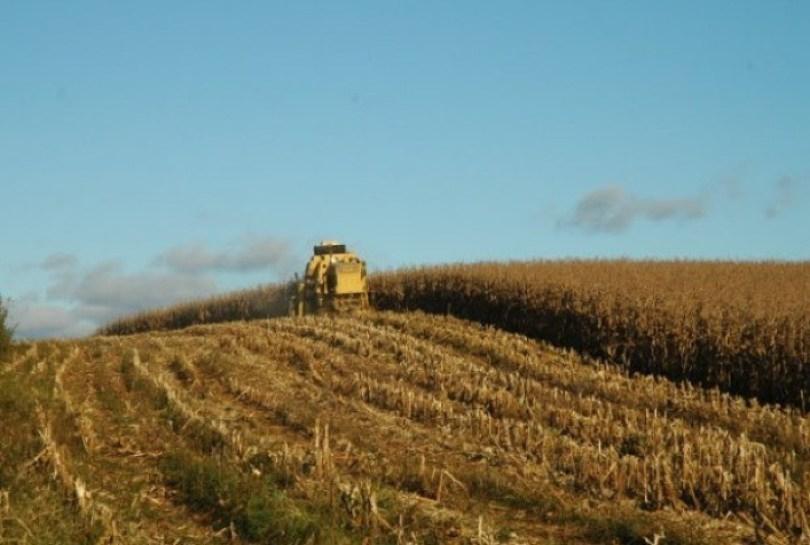 Produção de milho pode crescer 2,5 milhões de toneladas em SC sem ampliar área plantada