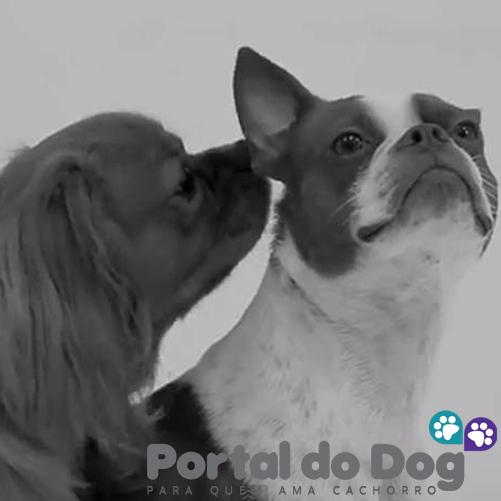teimosos-cachorros-06