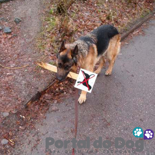 teimosos-cachorros-11