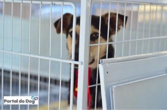Cachorro na feirinha de adoção da ONG Projeto CEL.