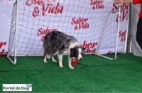 sp-dog-run-61-goleiro