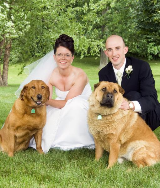 cachorros-casamentos-15