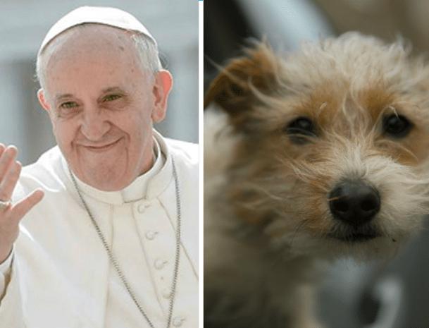 De acordo com o Papa Francisco, os cachorros vão para o Céu quando morrem. (Foto: Reprodução / Metro UK)