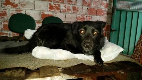 Cachorro em cima das bases de madeira. (Foto: Reprodução / Facebook)