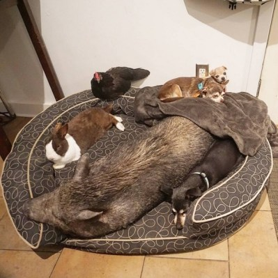 Os animais vivem todos juntos de forma harmoniosa. Todos se dão muito bem. (Foto: Reprodução / Instagram Wolfgag2242)