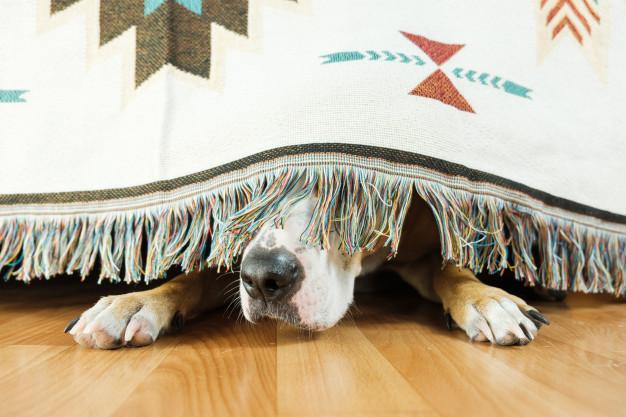 cão escondido
