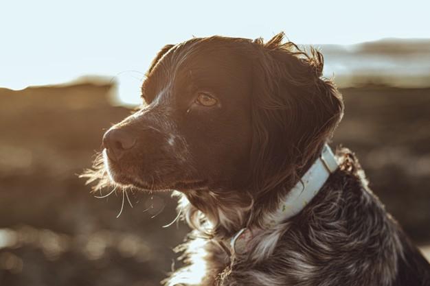 mudança com cachorro