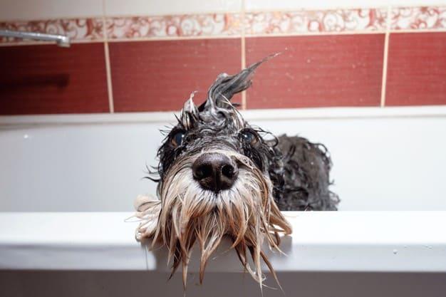 como fazer cachorro gostar de banho
